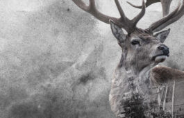 Elk and image of chernobyl site